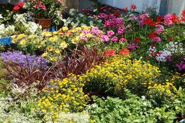 Flowers in a nursery, Sommer-Blumen in einer Gärtnerei zum Verkauf