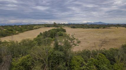 vista di un paesaggio bucolico con alberi e campi di grano in estate durante una giornata nuvolosa