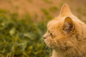 Cat in the green grass in summer.