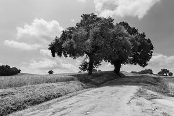 Country road and fields in black and white