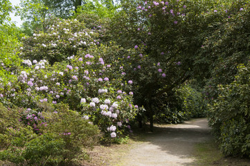 Rhododendron park way