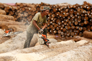 A worker uses a chainsaw to cut timber at a woodyard in Tianjin