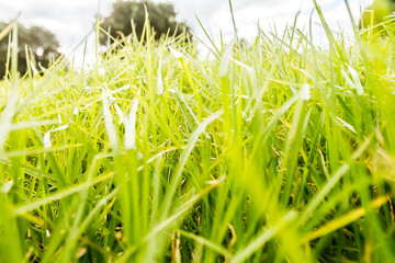 closeup of green grass on a field