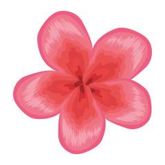 tropical flower decorative icon vector illustration design