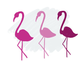 Colorful drawn bright flamingos for greeting card or advertisement with blue chalk background, isolated cartoon illustration painted by chalk and watercolor on white background, high quality