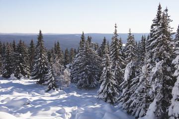 Mountain range Zuratkul, winter landscape. Snowdrifts near forest