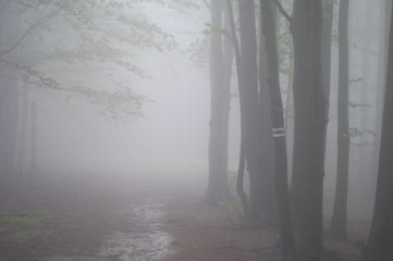 Trail through a forest in fog