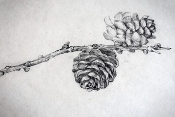Pencil drawing of a twig with cones