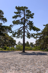 Trees of Cyprus