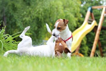 Psy bawią się w ogrodzie.