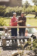 Senior couple examining wooden plank at yard during sunny day