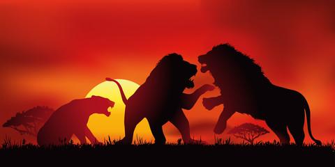 lion - sauvage - mâle - femelle - savane - félin -force - symbole - lionne - animal