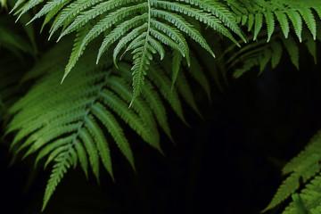 natural background of fern leaves in dark tones frame the frame