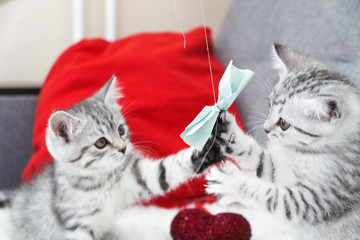 Kittens are cute playing with a bow. Kittens are striped