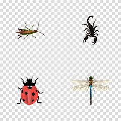 Realistic Locust, Poisonous, Damselfly And Other Vector Elements. Set Of Bug Realistic Symbols Also Includes Dragonfly, Ladybird, Ladybug Objects.
