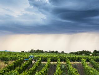 Winzer mit Traktor im Weingarten drohendes Unwetter