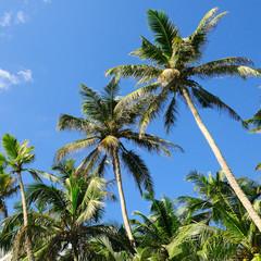 tropical palm trees and blue sky