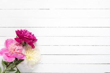 Peonies on white wooden planks background with copy space, top view. Great use as mock up for products, feminine design projects, wedding / invitation / holiday cards and so on