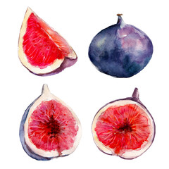 The fig fruit set isolated on white background, watercolor hand drawn illustration.