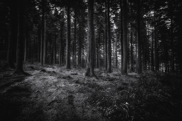 Idless woods near truro in cornwall england uk. Depp dark woods of mixed trees