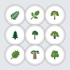 Flat Icon Ecology Set Of Foliage, Acacia Leaf, Baobab And Other Vector Objects. Also Includes Spruce, Park, Forest Elements.
