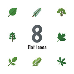Flat Icon Nature Set Of Tree, Maple, Oaken And Other Vector Objects. Also Includes Spruce, Wood, Leaves Elements.