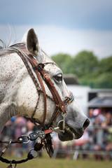 Biały koń - fototapety na wymiar