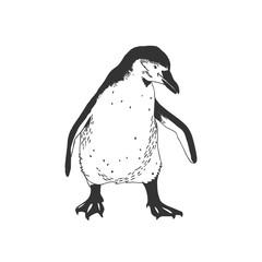 Penguin. Black and white illustration