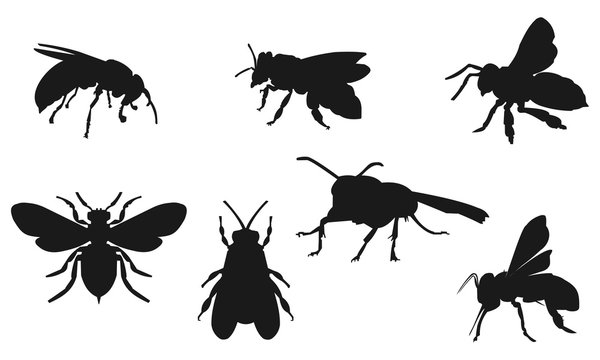 Bee vector silhouette