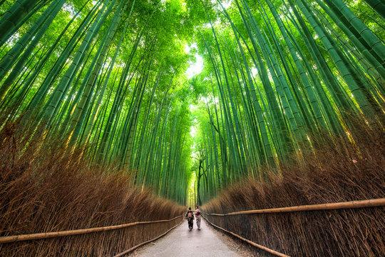 Sagano Path, Kyoto, Japan
