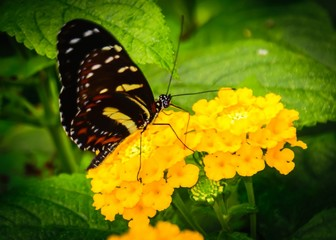 """""""A butterfly in the botanical garden in Marburg. """""""