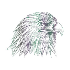 Sketch of eagle. Hand draw illustration.