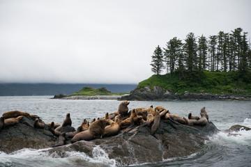 Sea Lions on Rocks