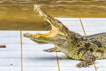 Acrylic Prints Crocodile krokodil