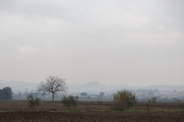 A country view in autumn / winter, with some trees and distant houses in the mist