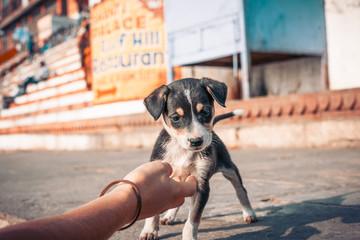 petit chien mignon voulant jouer avant d'etre caresser par une main de femme en inde