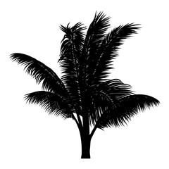 vector illustration of tropical tree silhouette