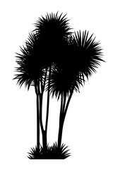 Wall Mural - vector illustration of tropical tree silhouette
