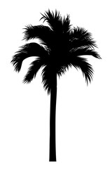 vector illustration of tropical palm silhouette