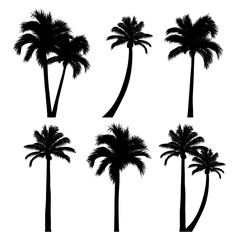 vector set of tropical palm tree silhouettes