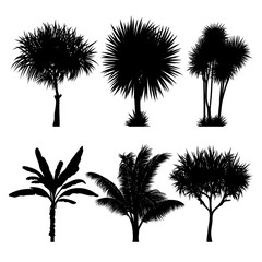Wall Mural - vector set of tropical palm and tree silhouettes