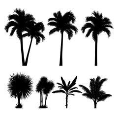 vector set of tropical palm and tree silhouettes