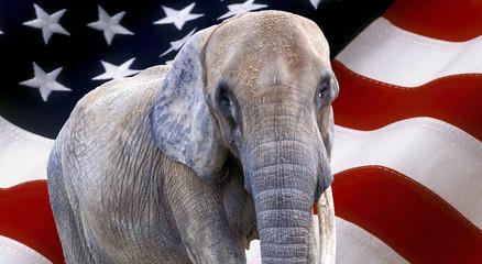elephant on usa flag used as background