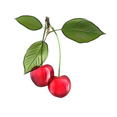 Illustration of cherry