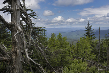 Old Worn Tree and Adirondack Mountain View