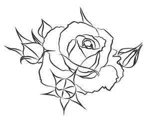 Sketch of a garden rose.