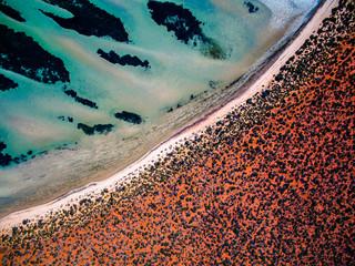 Shark Bay - Western Australia - SWD0026