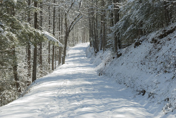 Greenbrier, Snow, Great Smoky Mountains NP