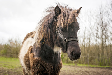 Brown horse with funny hair
