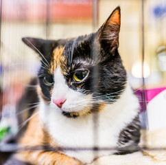 Portrait of one adult calico cat lying down in cage waiting for adoption scared